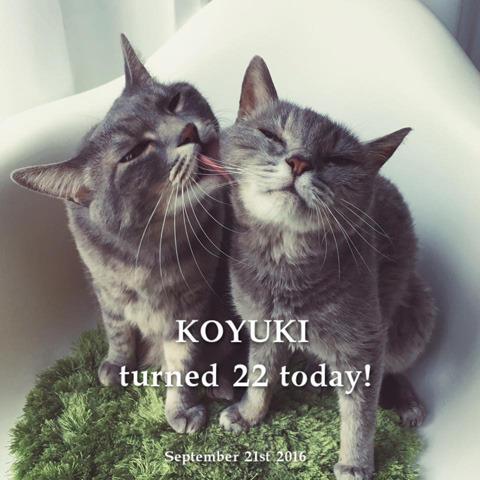 KOYUKIturned22.jpg