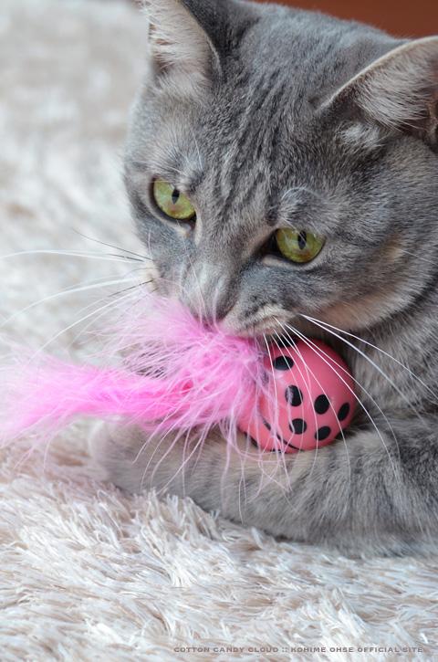 kittyfreak_04.jpg