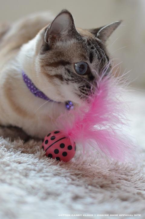 kittyfreak_06.jpg