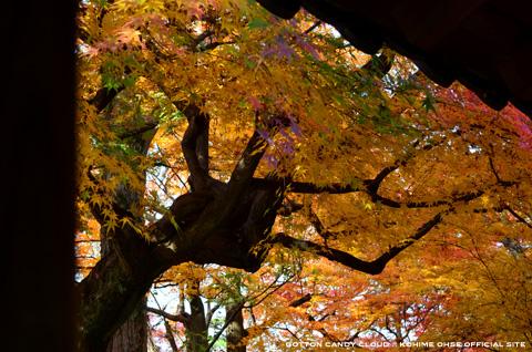 kyoto2013_03.jpg